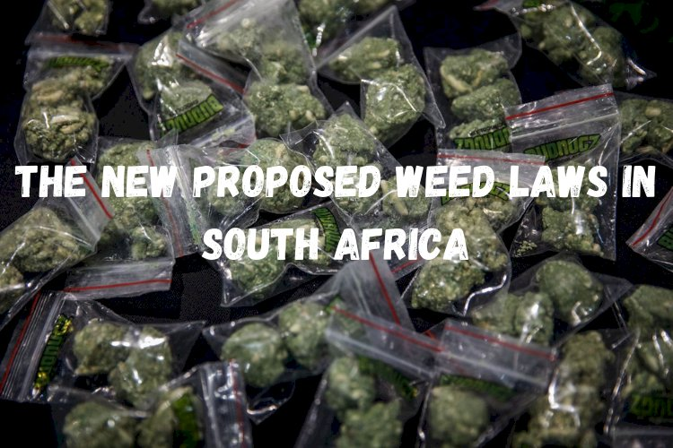 HERE IS WHAT YOU NEED TO KNOW ABOUT THE NEW PROPOSED WEED LAWS IN SOUTH AFRICA